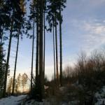 Waldspaziergang – Kyrill wandert noch immer mit